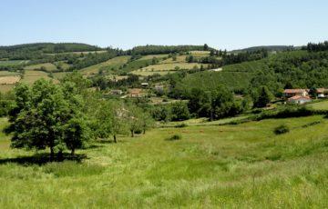 Boucle des trois Châteaux d'Ouroux : la campagne