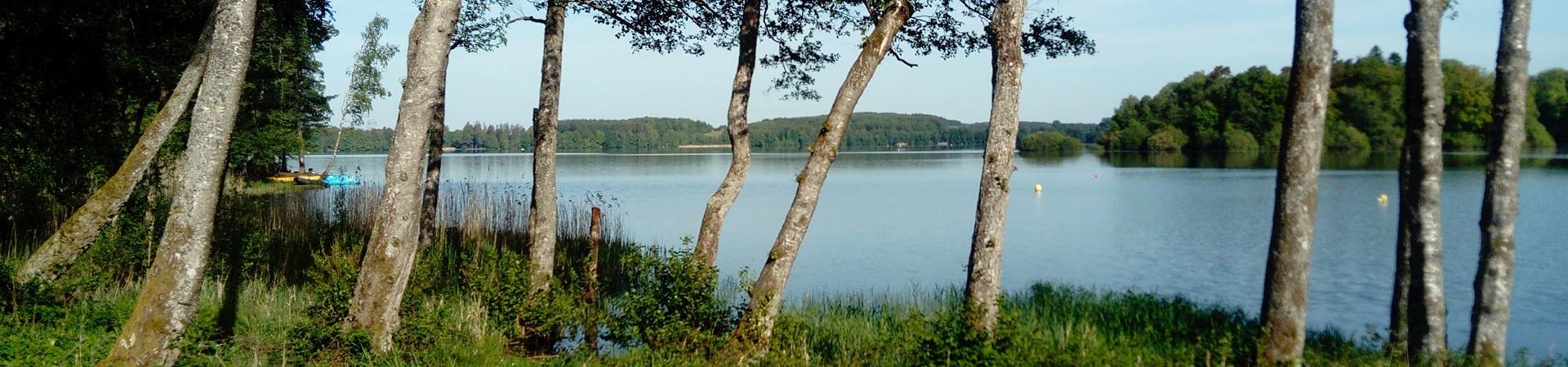 lac du Morvan avec en 1er plan des bouleaux